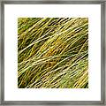 Flowing Green Grass  Abstract Framed Print