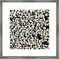 Foraminiferan Tests Framed Print