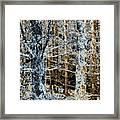 Forest Calm Framed Print