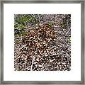Forest Fire A Framed Print