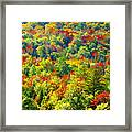 Forest Of Color Framed Print