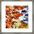 Forest Of Fall Colors Framed Print