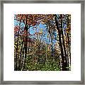 Forest Veteran Framed Print