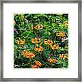 Four Butterflies On Turks Cap Lilies Framed Print