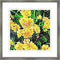 Freesias Framed Print