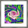 French Wild Rose Framed Print