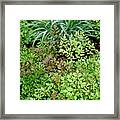 Fresh Greens Framed Print