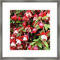 Fuchsia Pastel Framed Print