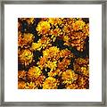 Gaia's Gold Framed Print