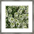 Garden Surprise 2 Framed Print