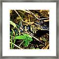 Gator Paint Framed Print