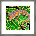 Gecko Hanging On Framed Print