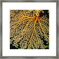Giant Coral Polyp Framed Print