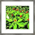Ginger Flowers Framed Print