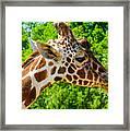 Giraffe Profile Framed Print