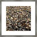 Glass Beach Framed Print