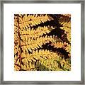 Golden Bracken Framed Print
