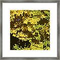 Golden Branches Framed Print