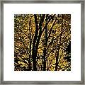 Golden Colors Of Autumn In New England  Framed Print