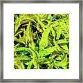 Golden Croton Framed Print