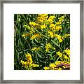 Golden October Framed Print by Christine Till