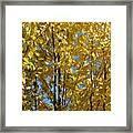 Golden October Framed Print