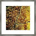 Golden Texture Abstract Framed Print