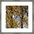 Golden Tree 2 Framed Print