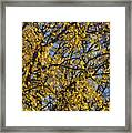 Golden Tree 3 Framed Print