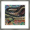 Gopher Snake Framed Print