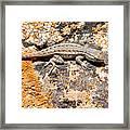 Grand Canyon Lizard Framed Print