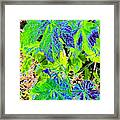 Grape Leaves Framed Print