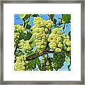 Grapes Not Wrath Framed Print