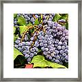 Grapes With Leaves Framed Print