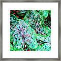 Green Caladium Framed Print