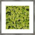 Green Curtain Framed Print