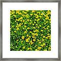 Green Field Of Yellow Flowers 1 Framed Print