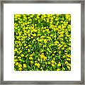 Green Field Of Yellow Flowers 2 1 Framed Print