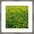 Green Field Of Yellow Flowers Framed Print