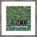 Green Ivy Window  Framed Print