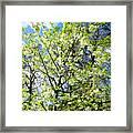 Green Park, London Framed Print