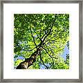 Summer Tree Canopy Framed Print