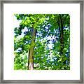 Green Trees 1 Framed Print