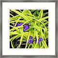 Greens And Purples Framed Print