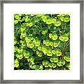 Greens And Yellows Framed Print