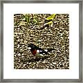 Grosbeak With Quizzical Look Framed Print