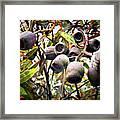 Gumnut Grouping Framed Print