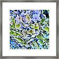 Hanson Hydrangea Framed Print