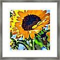 Happy Sunflower Framed Print