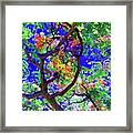 Hawaii Shower Tree Flowers In Abstract Framed Print